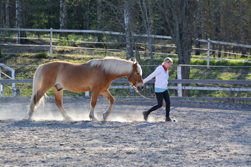 Frau läuft mit Pferd auf dem Hof