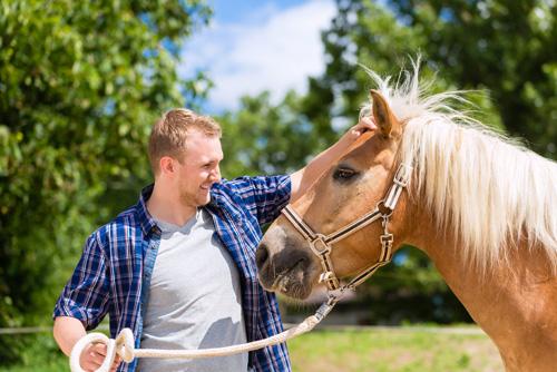 Mann streichelt Pferd am Kopf beim Coaching mit Pferden